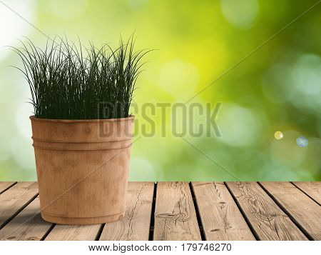 Green Grass In Wooden Pot