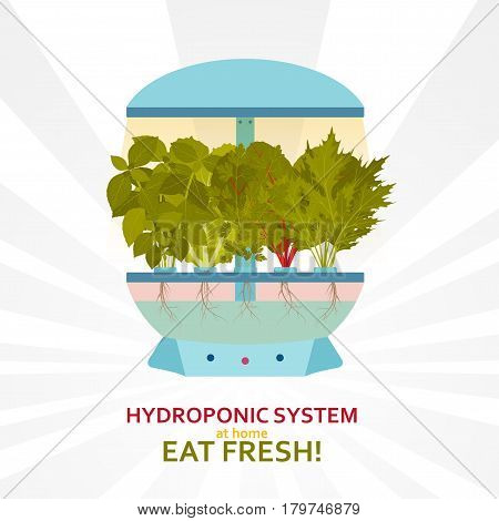 Hydroponic system for indoor gardening. Vector illustration.