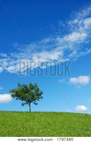Tree Vertical
