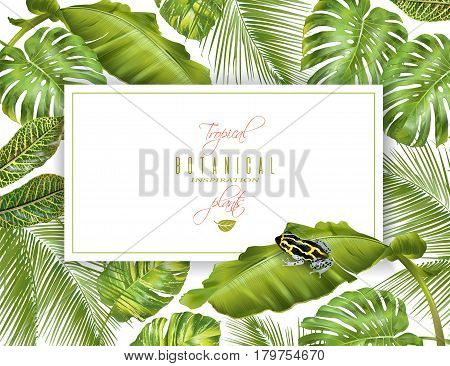 Vector tropical horizontal banner with monstera, banana leaves and little frog. Exotic design for cosmetics, spa, perfume, health care products. Can be used as wedding or summer background