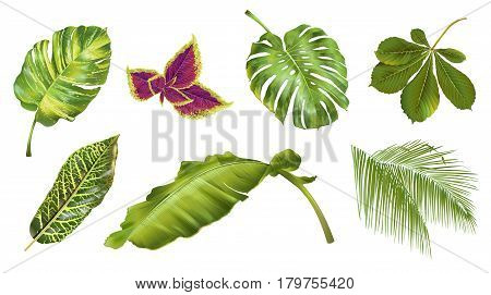 Vector tropical plants and leaves realistic set isolated on white background. Botanical elements for summer, exotic hawaiian style or wedding design