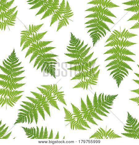 Vector illustration of green Fern seamless pattern.
