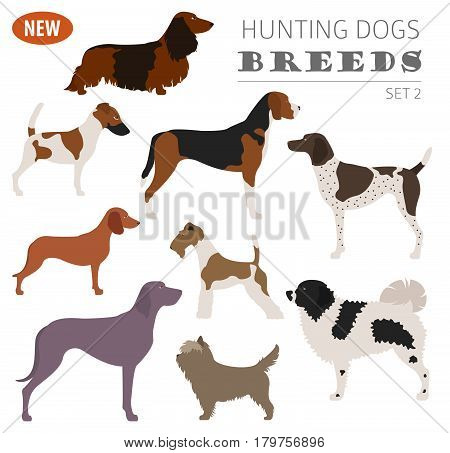 New Collection Dog Hunting_5