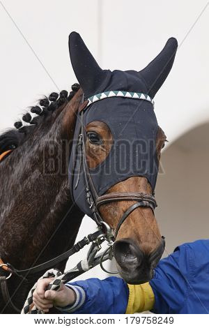 Race horse head with blinkers after the race. Paddock. Vertical