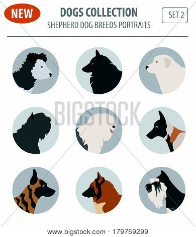 New Collection Dog Shepherd_7