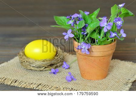 Easter card with Easter egg in the nest and violet flowers