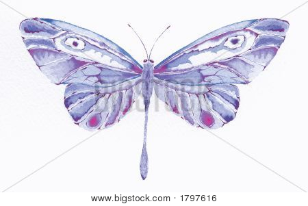 Purple And Pink Butterfly