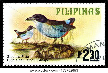 STAVROPOL RUSSIA - March 17 2017: A stamp printed by Philippines shows bird Steeres pitta Philippine animals circa 1979.