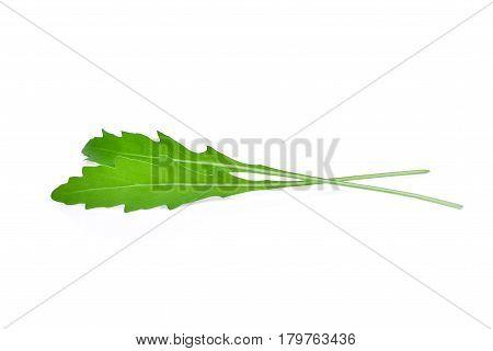 wild rocket leaves isolated on white backbground