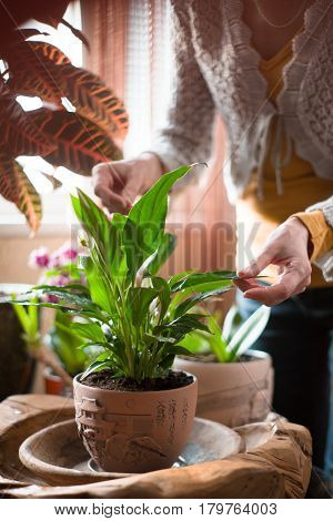 The woman caring for house plants vertical