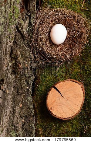 White Egg Inside Small Nest. Happy Easter Concept