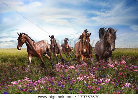 Rapid running of beautiful horses in the summer meadow in flowers