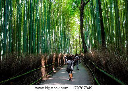 KYOTO JAPAN - OCTOBER 12 2015 : turists Inside the Arashiyama Bamboo Grove kyoto Japan