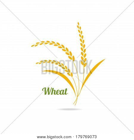 Icon of wheat. Vector element for use in bread packaging design project, bakery.