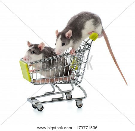 Two Small Gray-white Rats Sit In A Shopping Trolley On A Clean White Background.