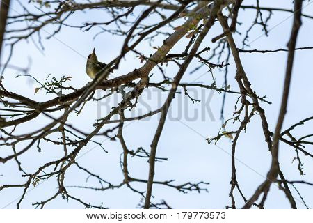 Young Bird Perched On A Branch Of A Bare Tree.