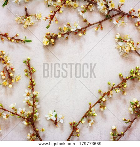 spring background of flowering branches with white flowers with space for text