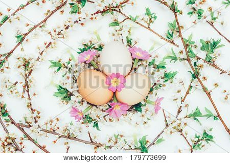 Three chicken eggs in flowering twigs and primrose flowers on a white background. Close-up top view. Concept of Easter spring