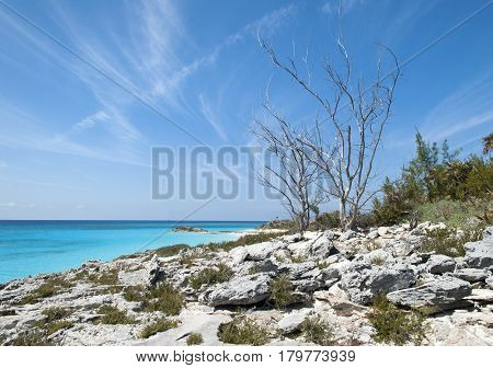 The view of a dry tree on a rocky landscape of uninhabited island Half Moon Cay (Bahamas).