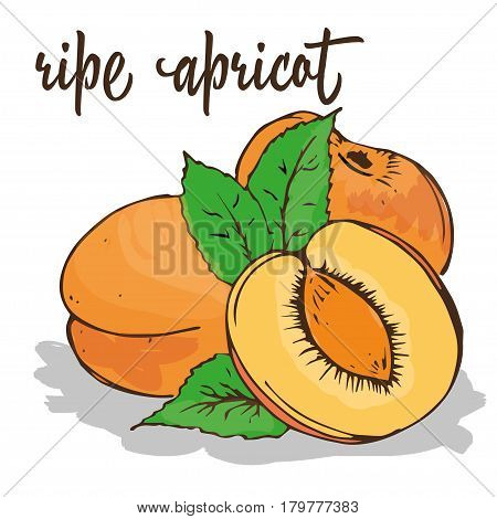 apricot is hand-painted is hand-painted in a very simple circuit and strokes