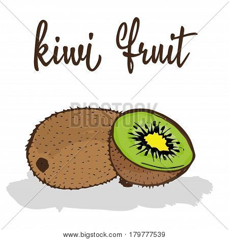 kiwi fruit is hand-painted in a very simple circuit and strokes