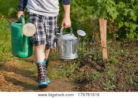 Kid boy carrying two big heavy watering cans with water. Child helping parents in the garden. Watering plants in the vegetable garden. Summer activities in the garden.
