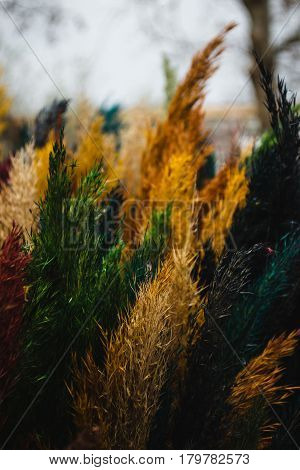 Photo of the Multicolored painted reed flower. Cane traditional symbol palm sunday. Easter concept. Diversity concept. Creative work. Equal rights movement