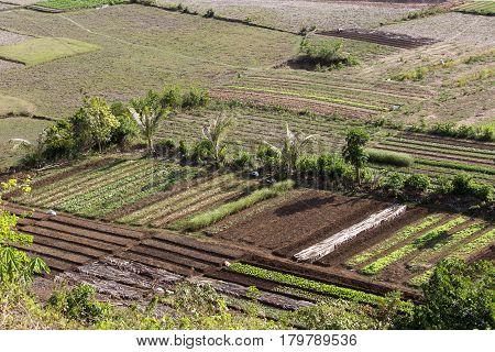 Agriculture field in North Vietnam panoramic view