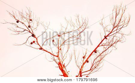 An abstract view of pine cones in a tree with red enhancement on a white background