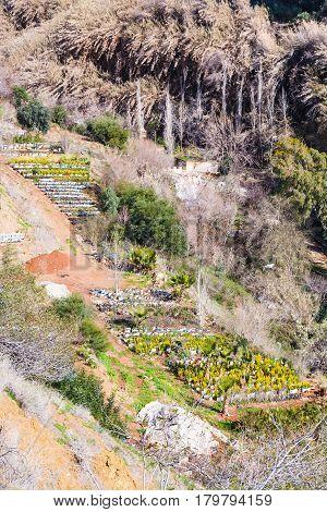 Tree Plantation In Terraced Gardens In Jordan