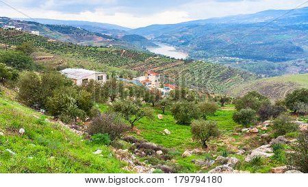 Terraced Gardens In Valley Zarga River In Jordan