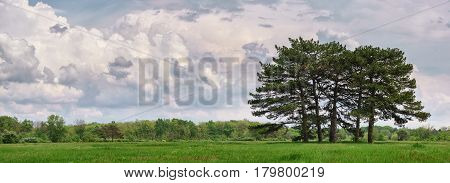 Beautiful spring landscape with meadow green grass fir trees and clouds.