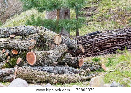 A pile of natural logs with bark lying on the ground
