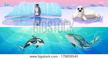 Colorful arctic animals horizontal banners with penguin seal and marine mammals in cartoon style vector illustration