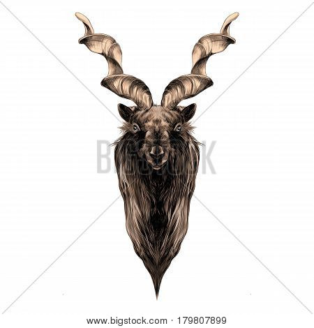 the head of a horned goat with big horns symmetry sketch vector graphics color picture