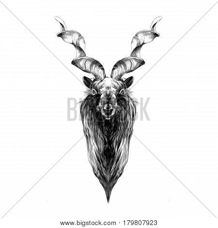 the head of a horned goat with big horns symmetry sketch vector graphics black and white drawing