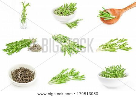Group of rosemary isolated on a white background