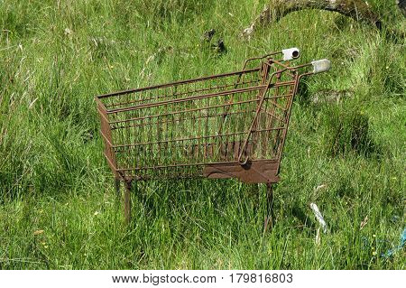 a rusted supermarket trolley abandoned amidst vegetation