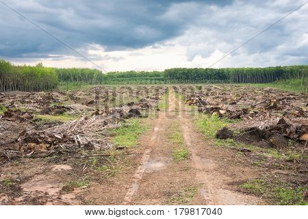 The cleared land for new plantation rebirth and the way concept.After raining day