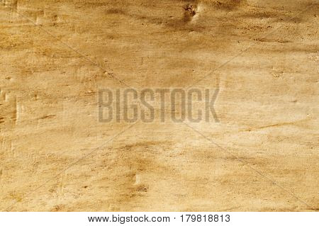Wood texture of dry wood freed from the crust. Wood texture background.