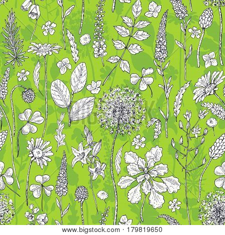 Hand drawn seamless pattern with wildflowers. Black and white doodle wild flowers and grass on green background. Monochrome floral elements. Vector sketch.