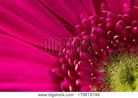 pink flower gerbera leaf is a delicate natural fragrant beautiful