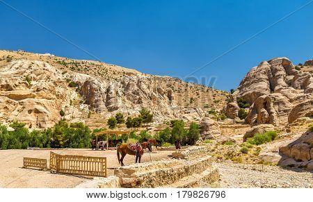 Bedouin hourses rest in the ancient city of Petra, Jordan