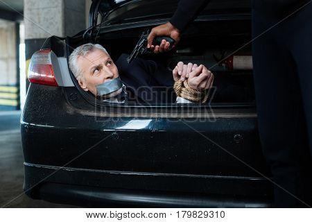 Victim of a crime. Scared anxious senior man lying in the car boot and having his hands tied while being at gunpoint