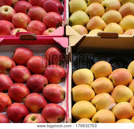 Organic red and yellow apples in cardboard crates