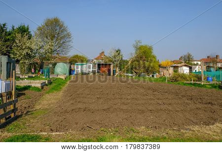 Allotment view of newly tilled plot in Spring with a fallen tree.
