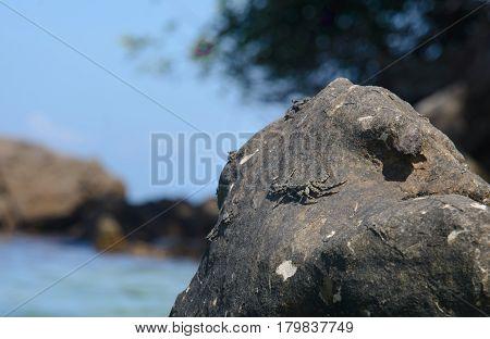Crab sitting on the Stone, Krabi, Thailand