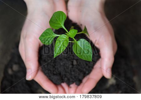 Woman hands holding young plant. Ecology concept.