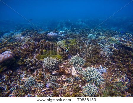 Underwater landscape of coral sea bottom. Tropical seashore underwater photo. Coral ecosystem with sea animals and plant. Exotic island sea snorkeling scene. Natural aquarium. Seabottom with corals