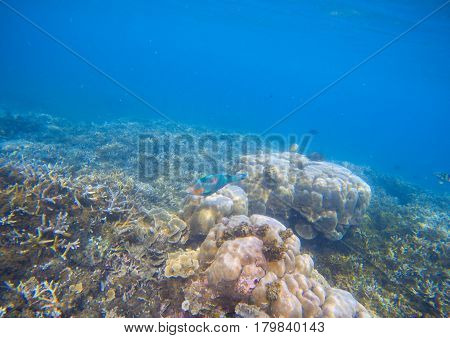 Coral reef landscape. Coral fish in corals. Tropical seashore underwater photo. Coral ecosystem with sea animals and plant. Exotic island sea snorkeling scene. Natural aquarium. Sea bottom with corals